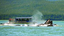 Juneau Whale Watching and Salmon Bake Combo, Juneau, Day Trips
