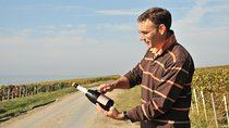 3-Hour Champagne Region Vineyard Visit from Reims with Wine Tasting and Picnic, Reims, Wine Tasting...