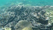 Magnetic Island Snorkel Tour, Townsville, Snorkeling