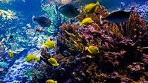 Fiji Snorkeling Tour in Bega Lagoon, Pacific Harbour, Other Water Sports