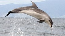 Ship Cove and Dolphin Eco-Tour Cruise, Picton, Dolphin & Whale Watching