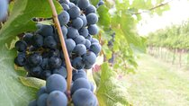 Typical Lucanian Wine & Food Experience at the Winery, Bari, Wine Tasting & Winery Tours