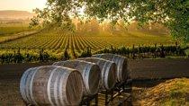Half Day Swirl, Sip & Savour Wine Tour, Niagara Falls & Around, Wine Tasting & Winery Tours
