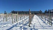 Kelowna Wine Tour, Kelowna & Okanagan Valley, Wine Tasting & Winery Tours