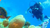 Rosario Islands Scuba Diving Experience, Cartagena, Multi-day Tours