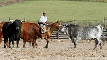 From Jerez: Private Visit to a Brave Bull