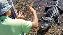Airboat Ride and Nature Walk with Naturalist in Everglades National Park Tickets