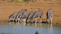 Pilanesberg Game Reserve 6 Hour Sunrise Safari from Johannesburg or Pretoria Tickets
