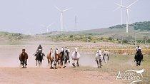 A CAMPO ABIERTO Visit Alvaro Domecq horses and brave bulls in freedom