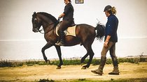 Riding lessons and riding courses in Spanish and classical riding style