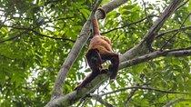 Tambopata Ecolodge Rainforest Encounter Tour
