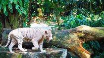 Full - Day Safari Experience - Zoo and River Safari Tickets