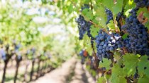 Full Day Wine Tour w / lunch Tickets