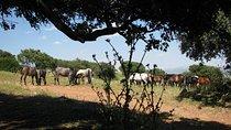 visita guiada desde Granada capital a dehesa serrana con yeguada de pura raza es
