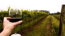 Niagara USA All-Inclusive Wine Tour