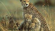 3 Days Kidepo Wildlife Adventure