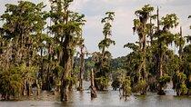 Bayou trees on Lake Martin, Lafayette, Louisiana