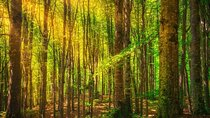 Sunlight filters through to the forest floor in the Casentinesi Forest National Park.