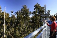 Imagen West Coast Tree Top Walk Experience