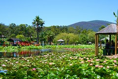 Imagen Blue Lotus Water Garden - Admission Ticket