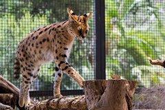 Imagen African Cat Encounter at Werribee Open Range Zoo