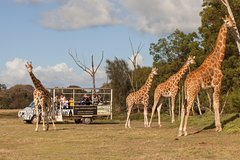 Imagen Off-Road Safari at Werribee Open Range Zoo