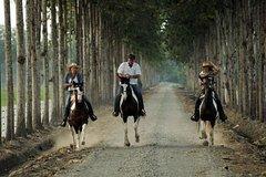 Imagen Escapada de un día a la Hacienda La Danesa con equitación y almuerzo