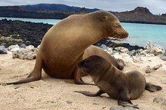 Imagen 5 Day Galápagos Islands Land Tour