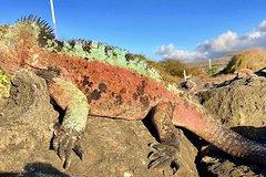 Imagen 5 Day Galápagos en Santa Cruz Island Land Tour