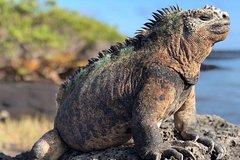 Imagen 4 Day Galápagos en Santa Cruz Island Land Tour