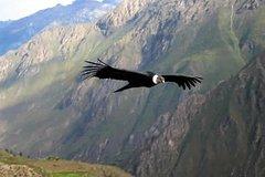 Imagen Condor Canyon Cusco