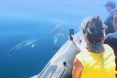 Actividades,Actividades,Actividades acuáticas,Actividades acuáticas,Salidas a la naturaleza,Deporte,
