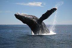 Imagen Whale-Watching Tour from Augusta or Perth with Optional Captain's Lounge Upgrade