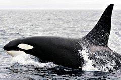 Imagen Bremer Bay Orca Experience