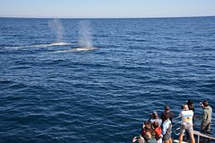 Imagen Blue Whale Perth Canyon Expedition