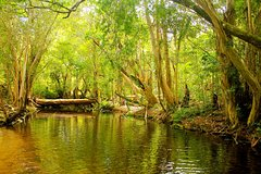 Imagen Private Half Day Tour: Exclusive World Heritage Rainforest and Waterfall Tour from Cairns