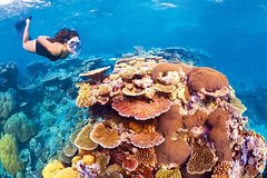 Imagen 6-Day Best of Cairns Including the Great Barrier Reef, Kuranda and the Daintree Rainforest