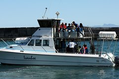 Big 5 Sea Safari in Walker Bay from Gansbaai