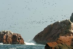 Imagen Ballestas Islands Sightseeing Boat Ride from Paracas