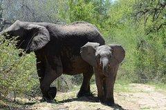 4-Day Kruger National Park