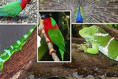Fiji Day Trip to Kula Eco Park and Local Village