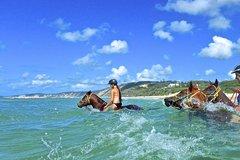 Imagen Horse Swimming Ride from Rainbow Beach