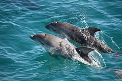 Imagen 3-Hour Dolphin and Seal Sightseeing Cruise, Mornington Peninsula