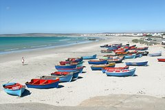 Cape West Coast Full Day Private Day Tour