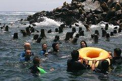 Actividades,Actividades de aventura,Adrenalina,Crucero por Islas Palomino,Nadar con leones marinos