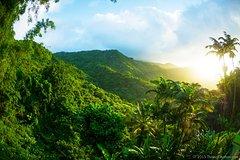 Ver la ciudad,Actividades,Tours de un día completo,Salidas a la naturaleza,Excursión a Parque Nacional El Yunque