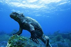 Imagen 6-Day Galapagos All Inclusive Island Hopping Tour