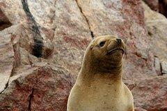 Imagen Ballestas Islands Group Tour from Paracas
