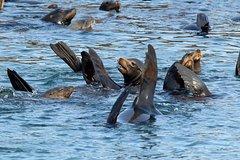 Imagen Half-Day Palomino Islands Sightseeing Cruise