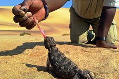 Living Dunes Experience from Swakopmund